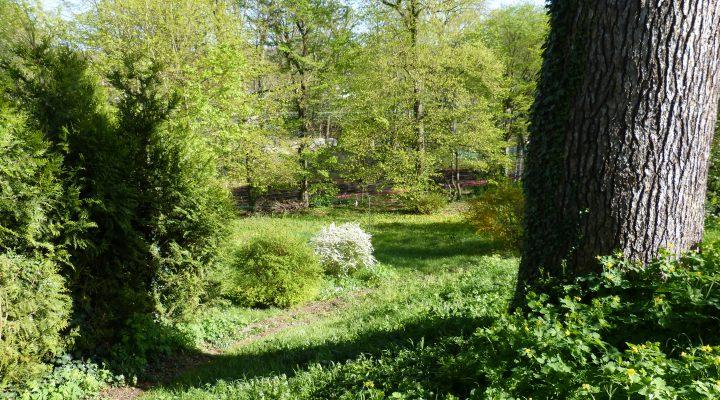 Le Coudray-Montceaux, Beau terrain constructible arboré de 943 m²