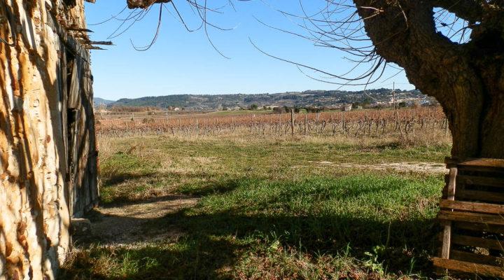 Image Gargas, Bel environnement pour cette vaste ferme de 200m2 à réhabiliter sur terrain de 6000 m².